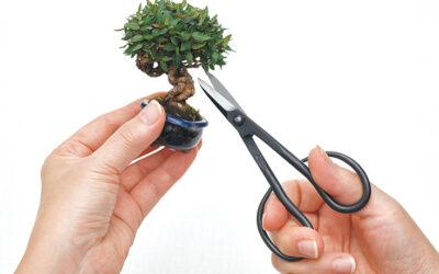 فن تقزيم الأشجار